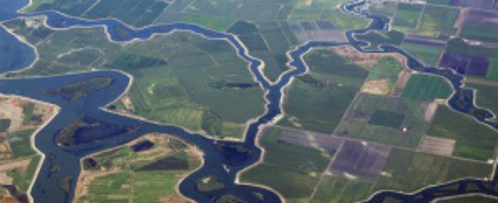 the delta1