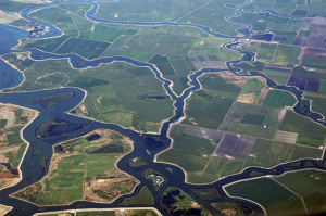 """Confidential"" Documents Reveal State Plans to Take Delta Farms"